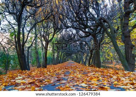 Autumnal scenery in Polish park - stock photo