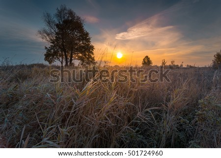 Autumnal sunrise landscape. Dry reeds, covered with hoarfrost on foreground.