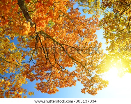 Autumnal trees and sunny sky - stock photo
