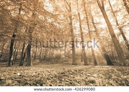 Autumnal trees inside forest. Woodland fall scenery. Nature vegetation season concept.  - stock photo
