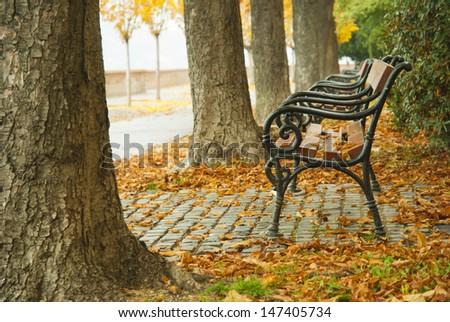 autumnal walkway  - stock photo