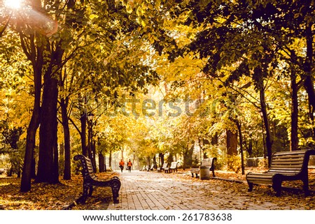 autumnal walkway  - stock photo