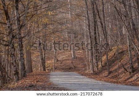 autumnal walkway with trees at Yedigoller National Park, Bolu / Turkey - stock photo