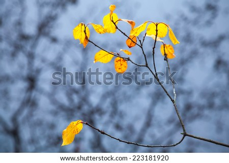 Autumnal yellow leaves on coastal tree with reflections in cold blue still lake water - stock photo