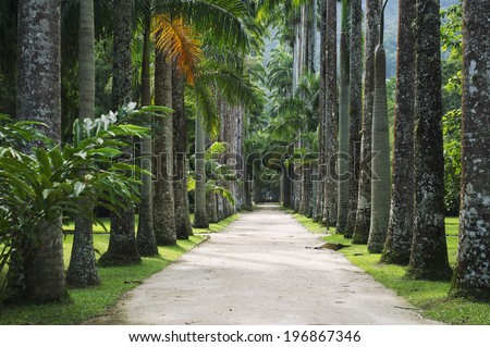 Avenue Royal Palm Trees Jardim Botanico Stock Photo & Image (Royalty ...