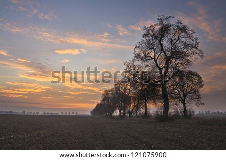 Avenue of trees - stock photo
