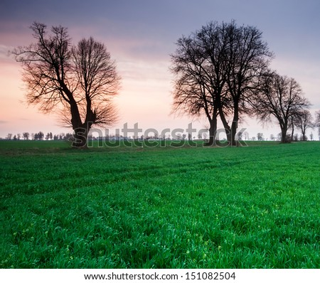 Avenue of trees at sunset - stock photo