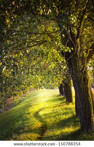 avenue of trees in the park/ Landscape with trees on a sunny day in summer - stock photo