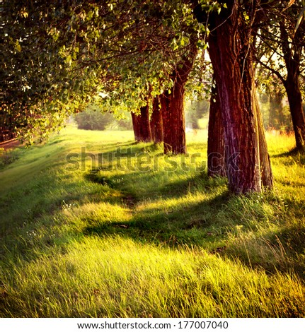 Avenue of trees / Landscape with trees on a sunny spring - stock photo