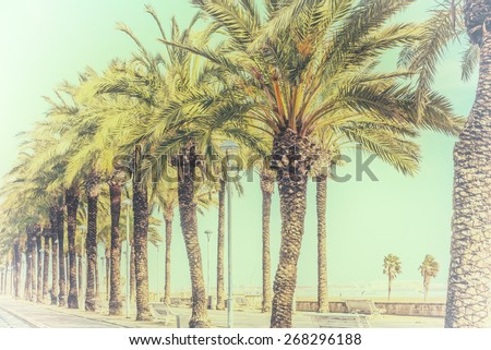 Avenue palm-lined on spanish Mediterranean coastline in tropical climate  Green palm trees along a european boulevard in Spain with white painted wooden benches. Image is filtered for a vintage style - stock photo