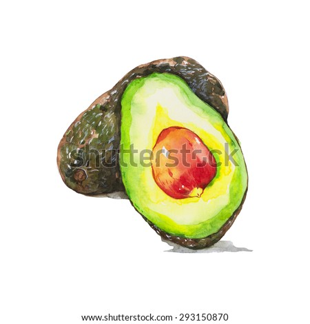 Avocado  and half avocado , watercolor painting isolated on white background - stock photo