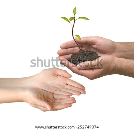 avocado sapling as a gift of agriculture - stock photo