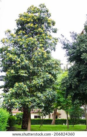 Avocado tree - stock photo