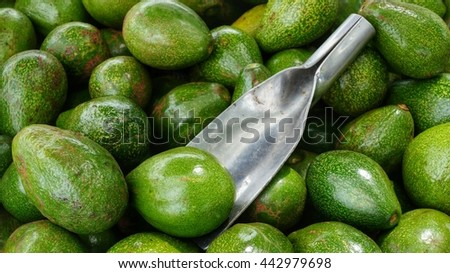 Avocados green. Bunch of ripe and delicious avocados with metal scoop. - stock photo