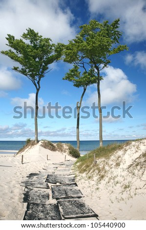 away to the beach, beach at baltic sea with blue sky in summer, three long green trees