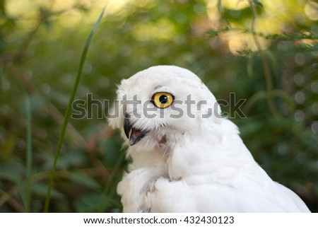 Awesome owl outdoor shot. Owl is typical species for many countries, owl could be found also in Zoo. Animal shot capturing owl.