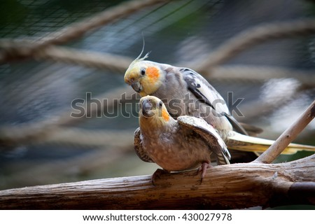 Awesome parrot outdoor shot. Parrot is typical Africa, Australia and New Zealand species, parrot could be found also in Zoo. Animal shot capturing parrot.   - stock photo