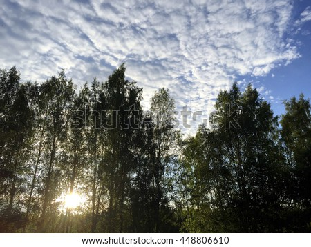 Awesome sky during sunset. The sun is going down behind the birch forest. Amazing cloud formations are in the blue sky. - stock photo