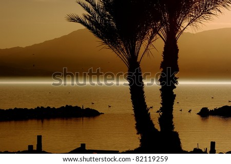 Awesome sunset, palm trees, and fog at the North Shore of the Salton Sea