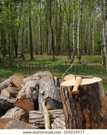 Axe and cut trees in forest.