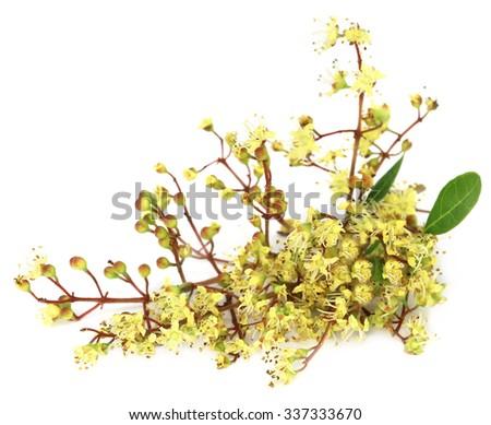 Ayurvedic henna flower over white background - stock photo