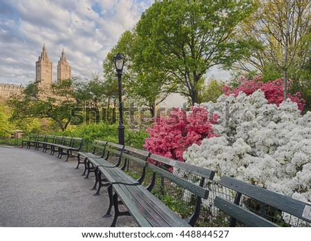Azaleas in Central Park in the Early Morning on spring day