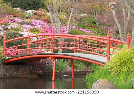 Azaleas in Japanese gardens toowoomba carnival of flowers  - stock photo