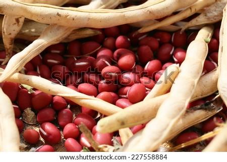 Azuki beans - stock photo