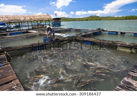 BA RIA VUNG TAU, VIETNAM. JUNE 7, 2013. A view of man's feeding cobia on farming at middle day. BA RIA VUNG TAU, VIETNAM, JUNE 7, 2013.