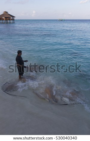 BAA ATOLL MALDIVES - CIRCA 2016 - An unidentified local man feeds the old stingrays and fish that come to the shore every afternoon for food.