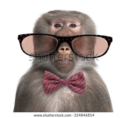 Baboon wearing glasses and a bow tie  in front of a white background - stock photo