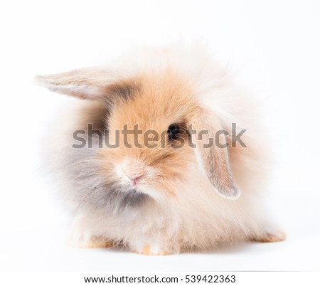 baby adorable brown rabbit on white background