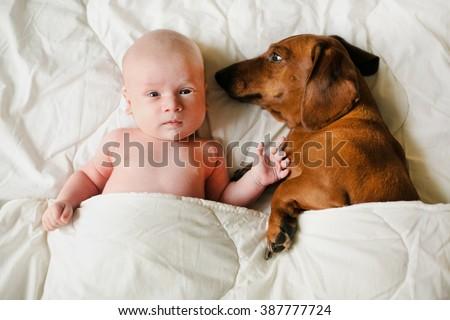 baby and dog lying sheltered blanket - stock photo
