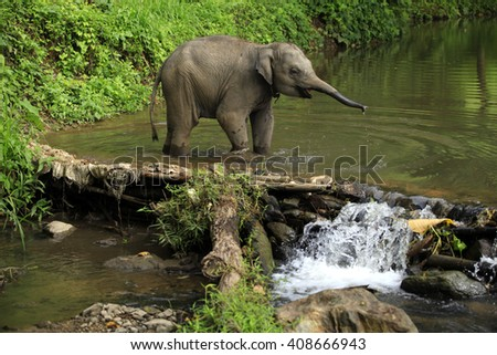 Baby asian elephant enjoy playing water , selective focus
