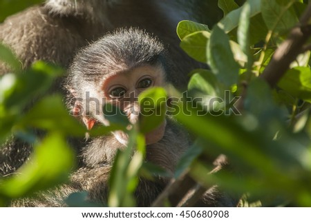 Baby Baboon at a Nature Reserve in South Africa