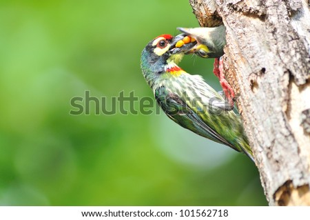 Baby birds in the nature - stock photo