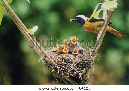 Baby birds in the nature.   - stock photo