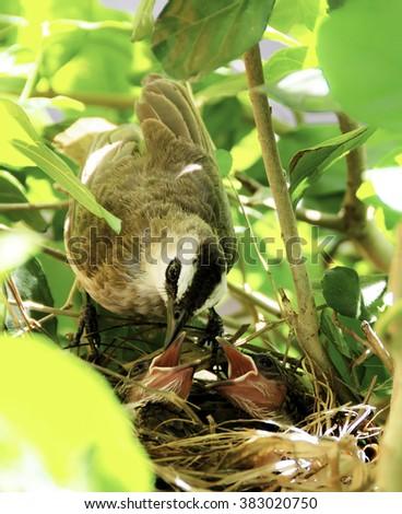Baby birds in the nest - stock photo