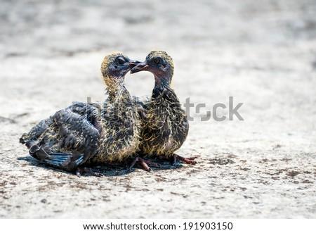 Baby birds on desert - stock photo