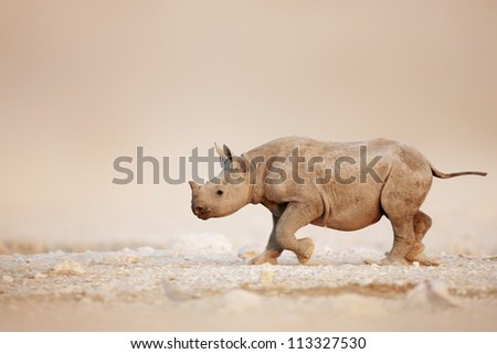 Baby Black Rhinoceros running over salty desert plains of Etosha - stock photo