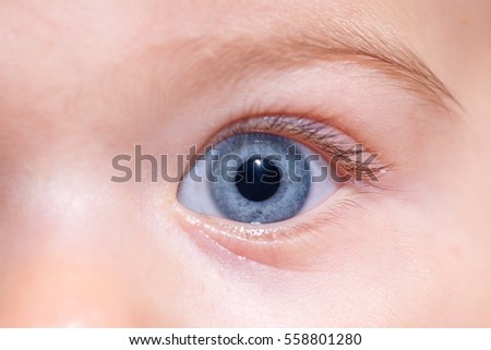 Baby blue eye closeup