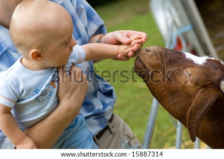 Baby boy feeding goat. Close up on hand and goat head