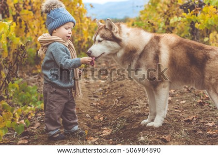 Baby boy in vineyard with husky dog
