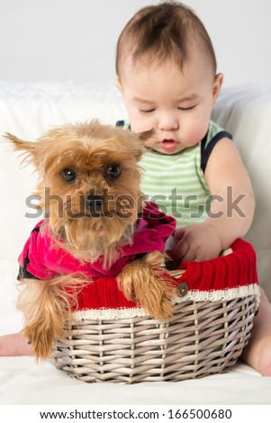 Baby boy with a dog in a wicker basket in studio, focus on a dog.
