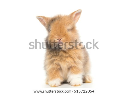 Baby brown rabbit, 3 weeks old new born bunny on white background