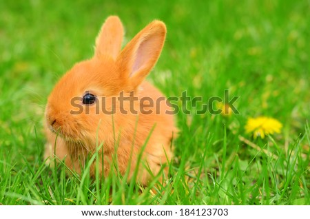 Baby bunny sitting in spring grass on the meadow