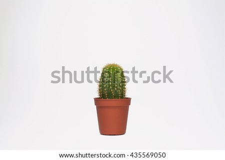 Baby Cactus in Small Pot Isolated on White Background (with clipping path) - stock photo