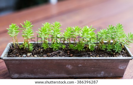 baby cactus plants against wooden background