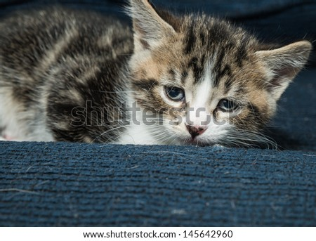 Baby cat resting on a sofa and relaxing - stock photo
