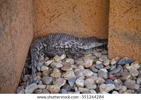 Baby crocodiles  - stock photo